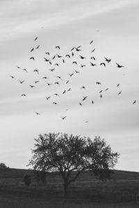 Zugvögel beobachten in Bargerveen. Beeindruckendes Naturschauspiel mit Wanderung und Naturführern.